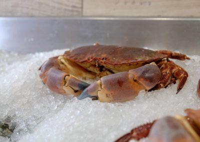 spiny-lobster-shoot-51_guetzli